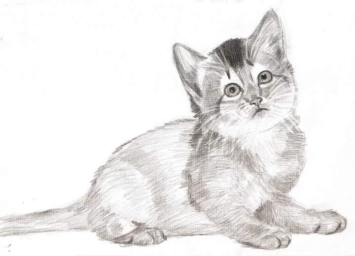 Gambar kucing, dan kucing di arsir